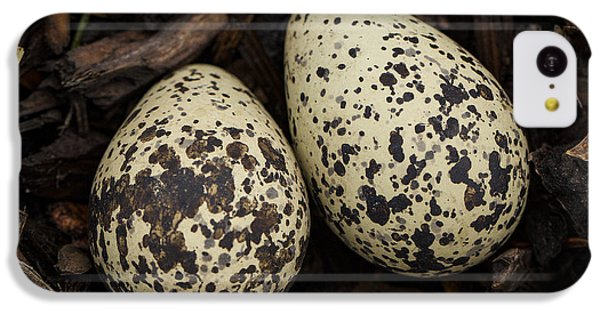 Speckled Killdeer Eggs By Jean Noren IPhone 5c Case by Jean Noren