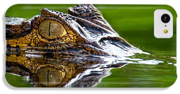 Crocodile iPhone 5c Case - Spectacled Caiman Caiman Crocodilus by Panoramic Images
