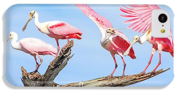 Spoonbill Party IPhone 5c Case