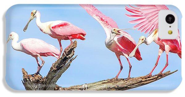 Spoonbill Party IPhone 5c Case by Mark Andrew Thomas