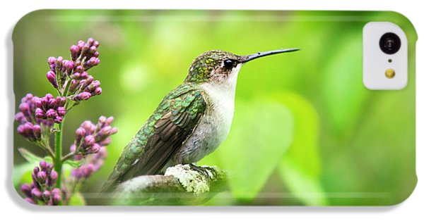 Spring Beauty Ruby Throat Hummingbird IPhone 5c Case