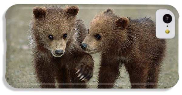 Brown Bear iPhone 5c Case - Spring Grizzly Cubs In Denali by Yva Momatiuk John Eastcott