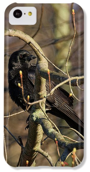 IPhone 5c Case featuring the photograph Springtime Crow by Bill Wakeley