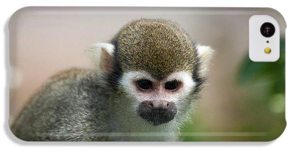 Squirrel Monkey IPhone 5c Case by Amanda Elwell