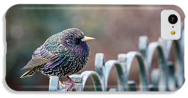 Starlings iPhone 5c Case - Starling Juvenile Male by Jane Rix