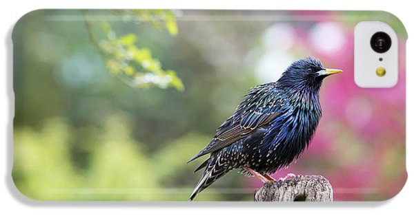 Starlings iPhone 5c Case - Starling  by Tim Gainey