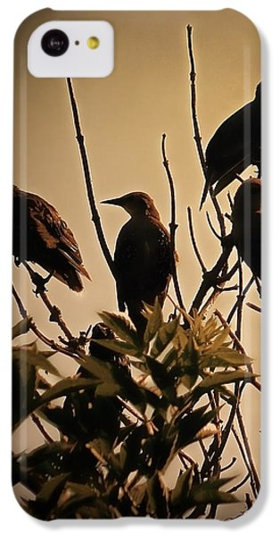 Starlings IPhone 5c Case by Sharon Lisa Clarke