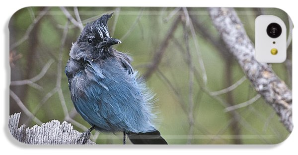 IPhone 5c Case featuring the photograph Stellar's Jay by Gary Lengyel