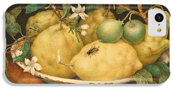 Still Life With A Bowl Of Citrons IPhone 5c Case by Giovanna Garzoni