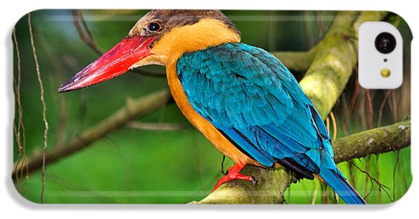 Stork-billed Kingfisher IPhone 5c Case by Louise Heusinkveld