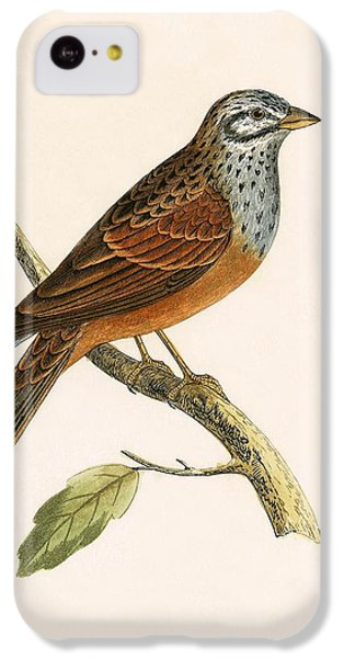 Striolated Bunting IPhone 5c Case by English School