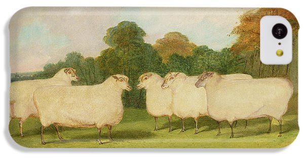 Sheep iPhone 5c Case - Study Of Sheep In A Landscape   by Richard Whitford