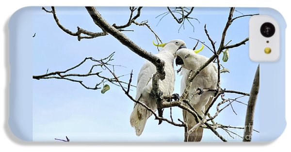 Sulphur Crested Cockatoos IPhone 5c Case by Kaye Menner