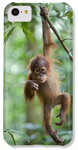 Sumatran Orangutan Pongo Abelii One IPhone 5c Case