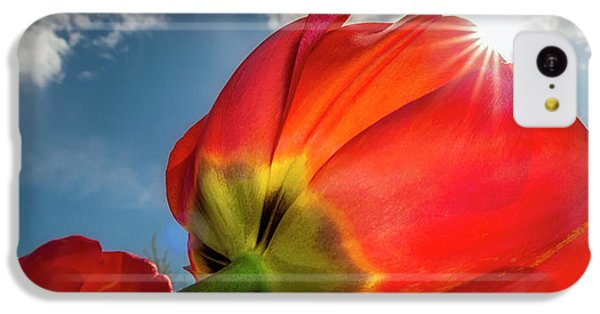 IPhone 5c Case featuring the photograph Sunbeams And Tulips by Adam Romanowicz