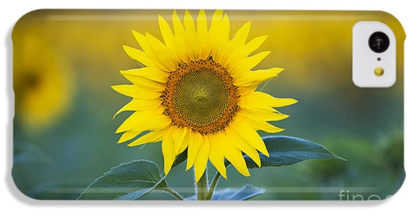 Sunflower iPhone 5c Case - Sunflower by Tim Gainey