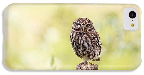 Sunken In Thoughts - Staring Little Owl IPhone 5c Case