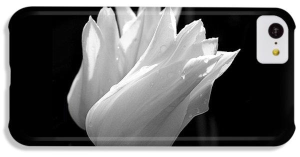 Sunlit White Tulips IPhone 5c Case