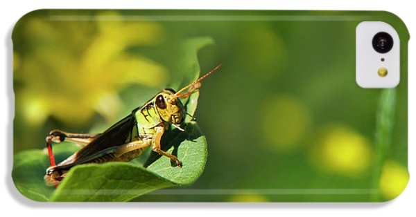 Green Grasshopper IPhone 5c Case by Christina Rollo