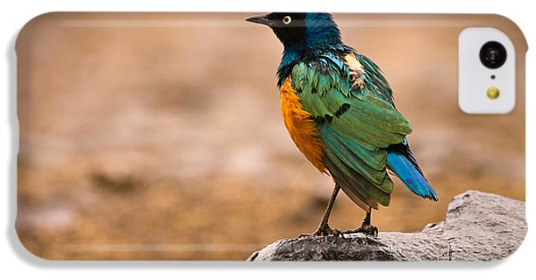 Starlings iPhone 5c Case - Superb Starling by Adam Romanowicz
