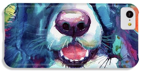Colorful iPhone 5c Case - Surprised Border Collie Watercolor by Svetlana Novikova