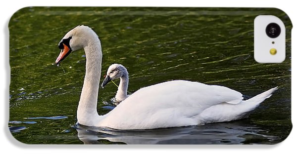 Swan Mother With Cygnet IPhone 5c Case