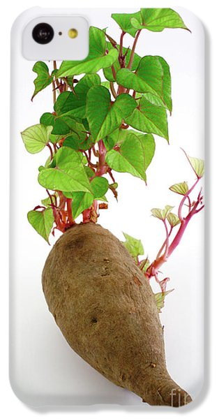 Sweet Potato IPhone 5c Case by Gaspar Avila