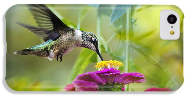 Humming Bird iPhone 5c Case - Sweet Success by Christina Rollo