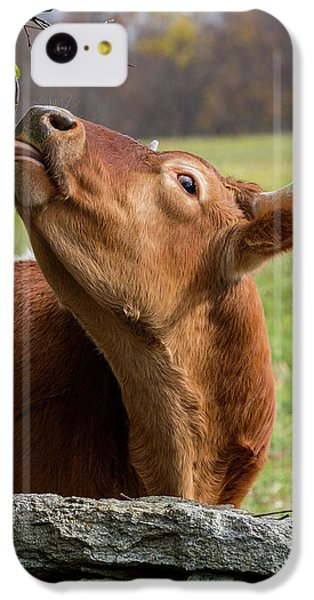 IPhone 5c Case featuring the photograph Tasty by Bill Wakeley