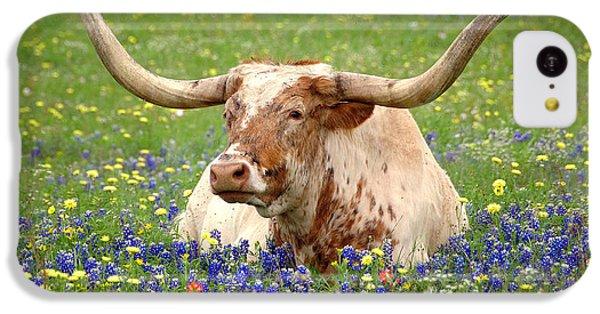 Texas Longhorn In Bluebonnets IPhone 5c Case