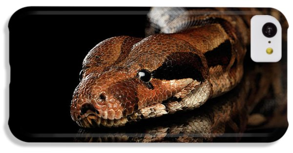 The Boa Constrictors, Isolated On Black Background IPhone 5c Case