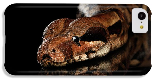 The Boa Constrictors, Isolated On Black Background IPhone 5c Case by Sergey Taran