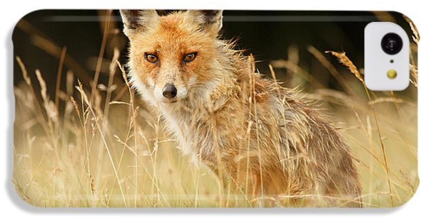 The Catcher In The Grass - Wild Red Fox IPhone 5c Case