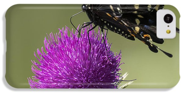 The Eastern Black Swallowtail  IPhone 5c Case