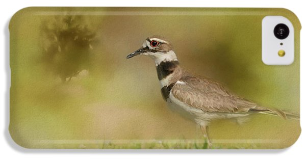 Killdeer iPhone 5c Case - The Elusive Killdeer by Jai Johnson