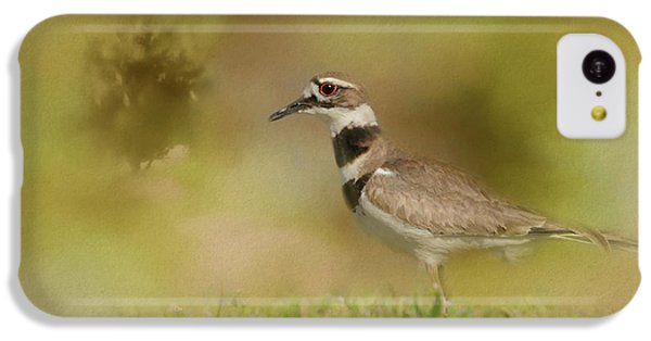 The Elusive Killdeer IPhone 5c Case by Jai Johnson