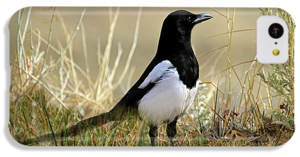 Magpies iPhone 5c Case - The Elusive Magpie by Donna Kennedy