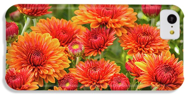 IPhone 5c Case featuring the photograph The Fall Bloom by Bill Pevlor