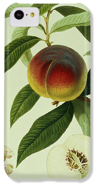 The Galande Peach IPhone 5c Case by William Hooker