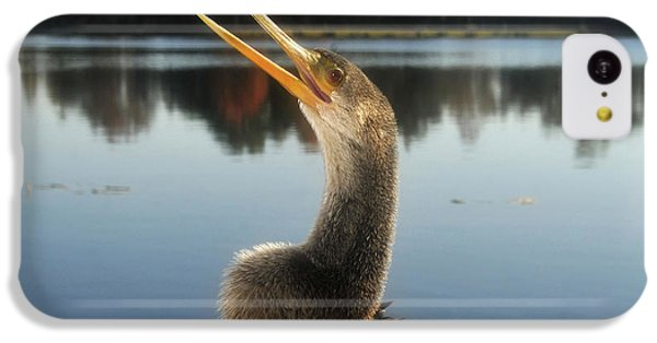 The Great Golden Crested Anhinga IPhone 5c Case by David Lee Thompson