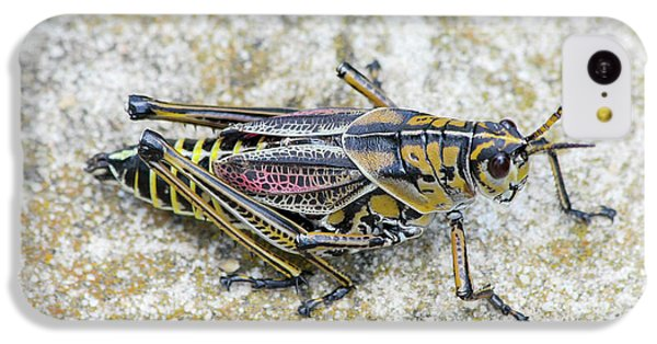 The Hopper Grasshopper Art IPhone 5c Case by Reid Callaway