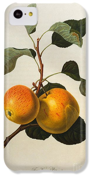 The Kerry Pippin IPhone 5c Case by William Hooker