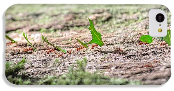 Ant iPhone 5c Case - The Leaf Parade  by Betsy Knapp