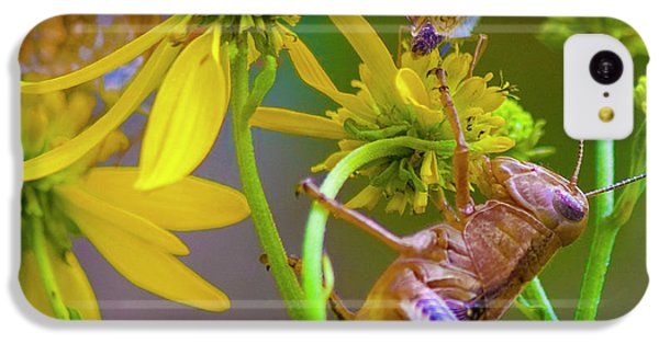 Grasshopper iPhone 5c Case - The Little Things by Betsy Knapp