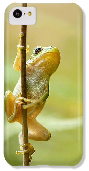 The Pole Dancer - Climbing Tree Frog  IPhone 5c Case by Roeselien Raimond