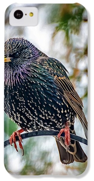 Starlings iPhone 5c Case - The Starling by Adrian Evans