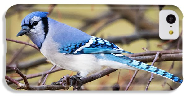 The Winter Blue Jay  IPhone 5c Case