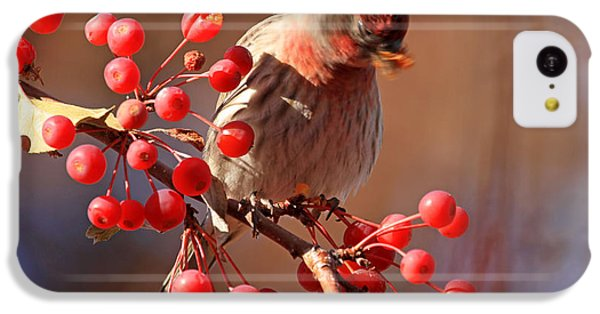 Finch iPhone 5c Case - These Berries Are Making Me Dizzy  by Donna Kennedy