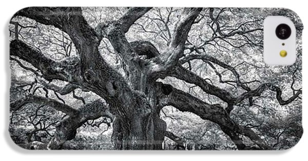 iPhone 5c Case - This Tree Is Located In Charleston by Jon Glaser