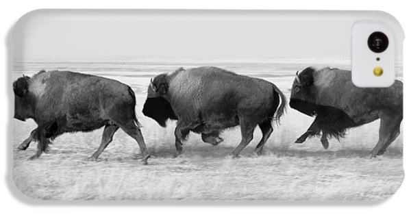 Three Buffalo In Black And White IPhone 5c Case